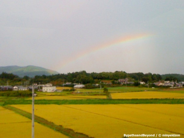 rainbow over rice field