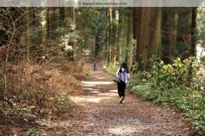 Cedar Walk